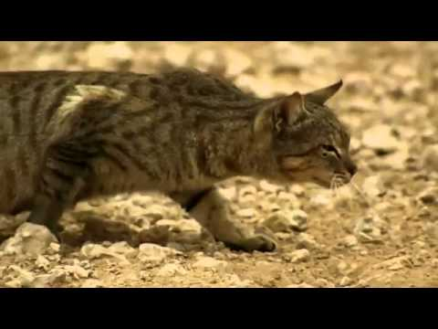 Feral Cat Attack Videos