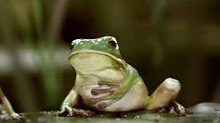 Motilium GrandMaster grenouilles