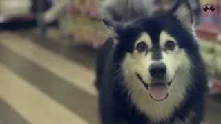 Let's Talk About Pets: The Shocking Truth