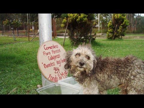 Comedero automatico para perros doovi for Comederos para perros