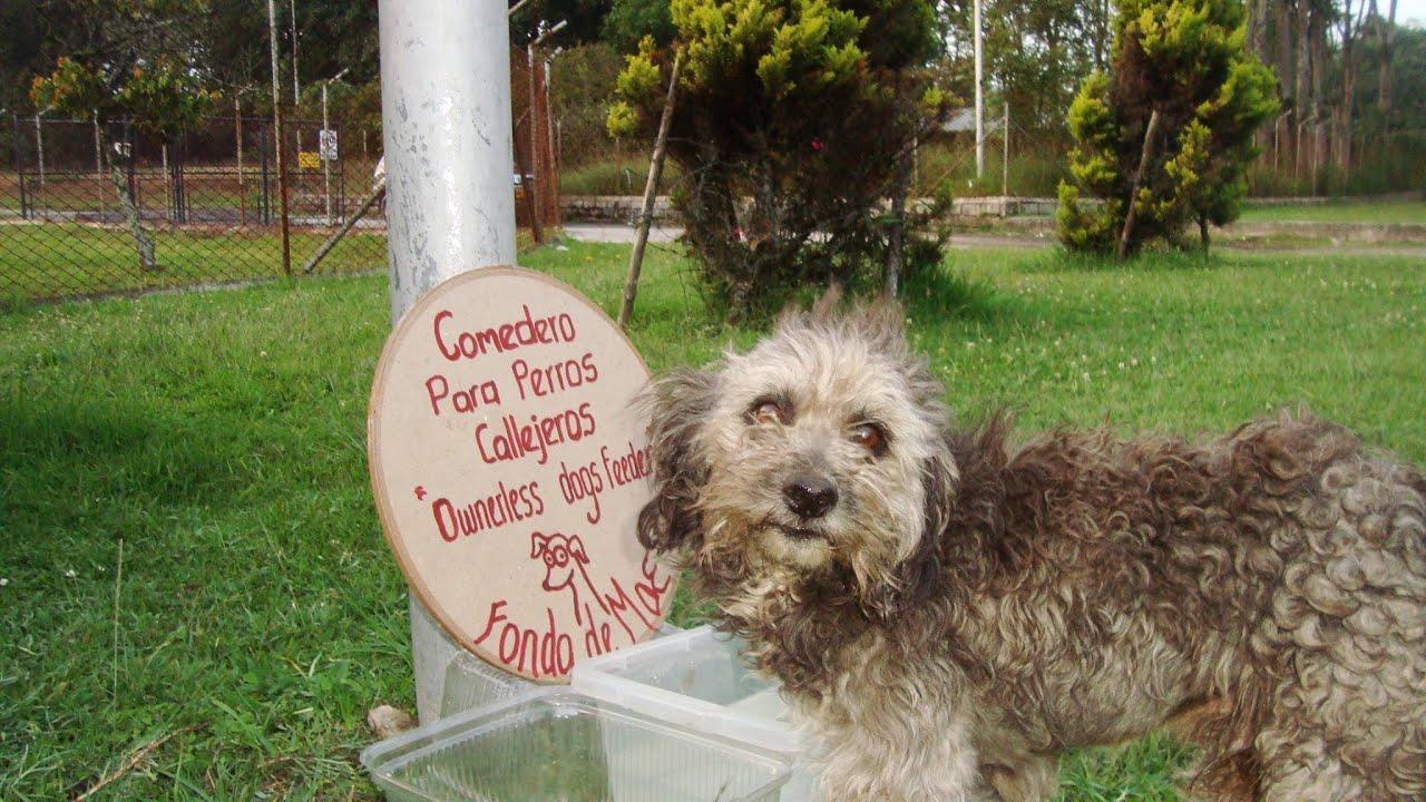 J venes rionegreros crean comedero para perros callejeros for Comederos para perros