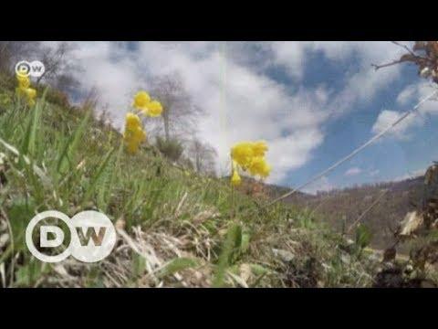 Protecting Kosovo's medicinal plants | DW English