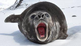 दुनिया के 10 सबसे बड़े जानवर Top 10 biggest animals on earth