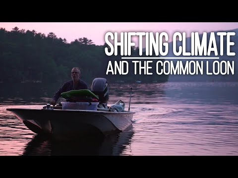 A Call for Help Echoes Across New Hampshire's Lakes