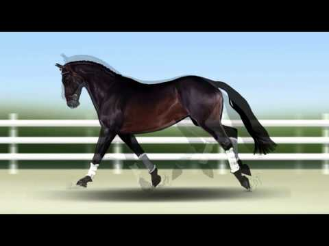 Calm Study Music with Slow Horse Clip Art