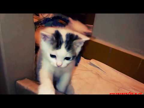 Kittens Playing Together/Cute Kitten Videos Funny/Cute Kitten Videos Try Not To Laugh!