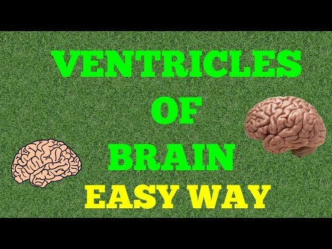 VENTRICLES OF BRAIN (EASY WAY)