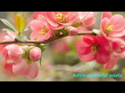 beautiful world  mundo maravilloso  Anya  Beautiful World
