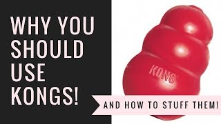Why You Should Use KONG dog toys! (and how to stuff them!)