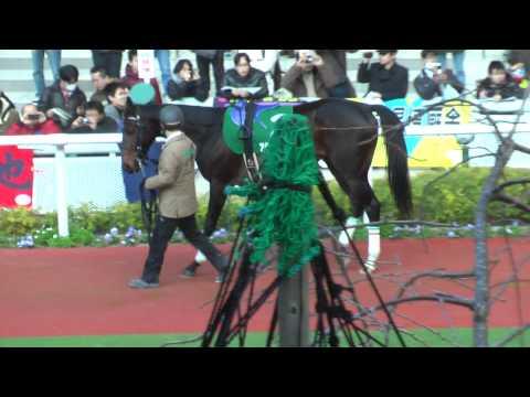 【HD】20111224 阪神11RラジオNIKKEI杯2歳S パドック 1着アダムスピーク