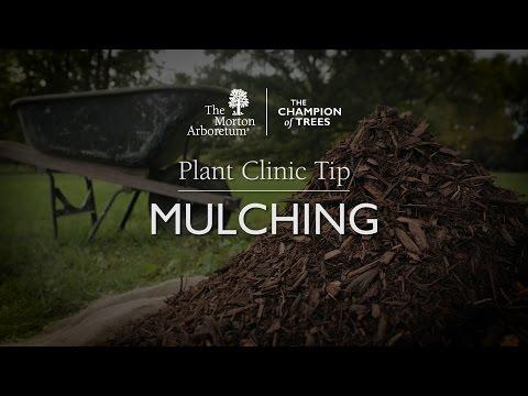 Mulching trees and shrubs | The Morton Arboretum