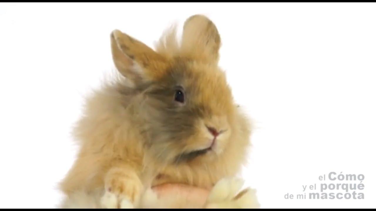 Mi conejo es el mejor 1982 threesome erotic scene mfm