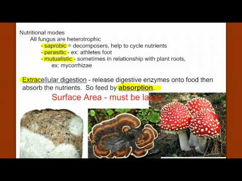 Introduction to Fungus from YouTube · Duration:  15 minutes 26 seconds