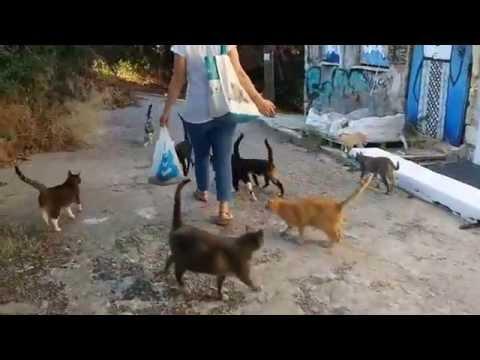 1001 Athenian Cats