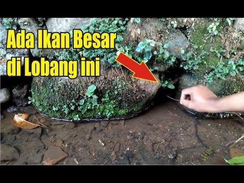 ANEH ! Mancing Ikan Gabus dalam Lubang Batu di Selokan Kecil Lihat Hasilnya