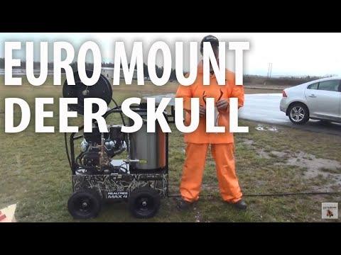 Euro Mount Deer Skull using Pressure Washer - Easy Kleen