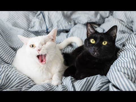 All About My Cats, Coco and Eloise!