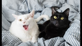 All About My Cats, Coco and Eloise! thumbnail
