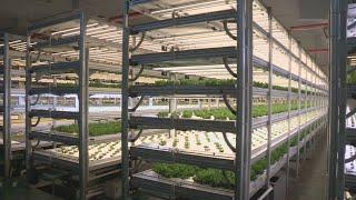 전천후 수직형 식물공장…생산효율 최대 120배 / 연합…