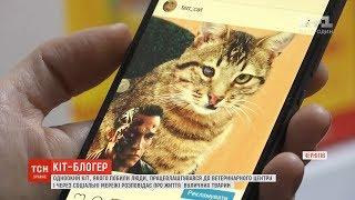У Чернігові кіт через соціальні мережі розповідає про вуличних тварин