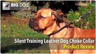 Rottweiler, Cane Corso And Neapolitan Mastiff Wearing Round Choke Collar For Training