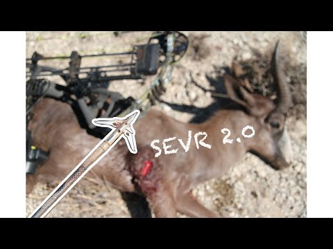 First Hunt In Africa w/ SEVR 2.0 - Black Springbok Bowhunt