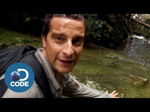 Bear Grylls in Borneo Jungle | Man vs Wild (5/6)