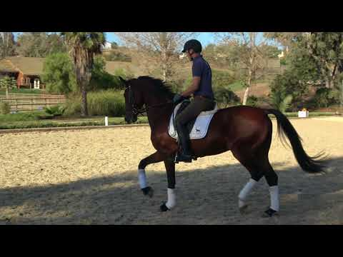How To Handle Energy In A Young Horse Under Saddle