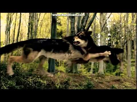 Wolfblood -bad blood
