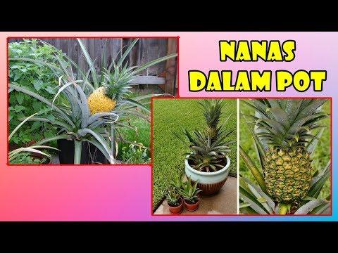 BELI BIBIT TANAMAN HIAS DAN BUAH-BUAHAN MURAH DI JAKARTA from YouTube · Duration:  12 minutes 47 seconds