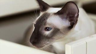 Отравление у кошек ➠ Ознакомьтесь с советами ветеринара