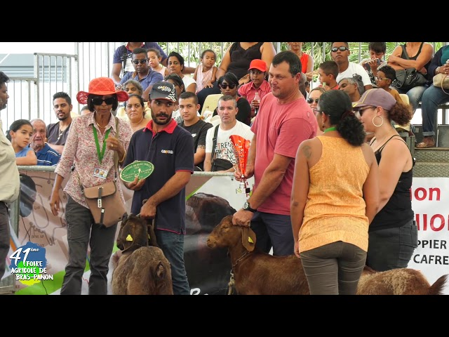 41éme Foire de Bras-Panon concours caprin organisé par la Chambre d'Agriculture