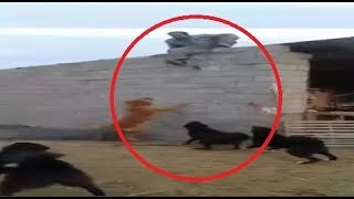 When dog training goes wrong part 2!!!