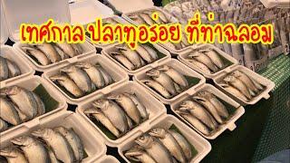 เที่ยวงานเทศกาลปลาทูอร่อย ท่าฉลอม สมุทรสาคร