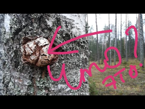 Что это??? Прогуляемся по лесу и выясним! / What is it??  Take a walk through the woods and find out