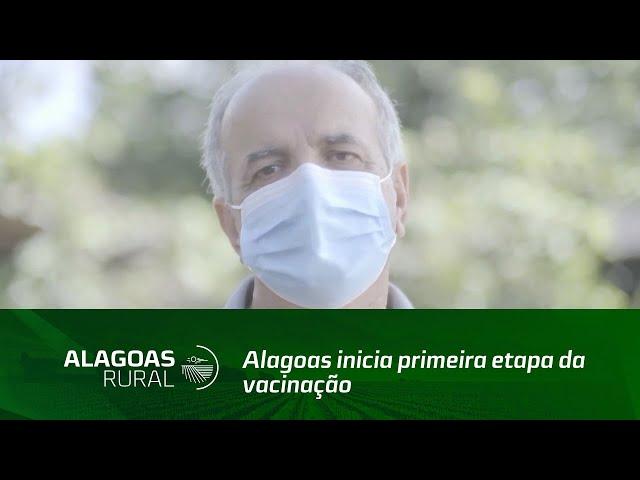 Alagoas inicia primeira etapa da vacinação contra febre suína clássica