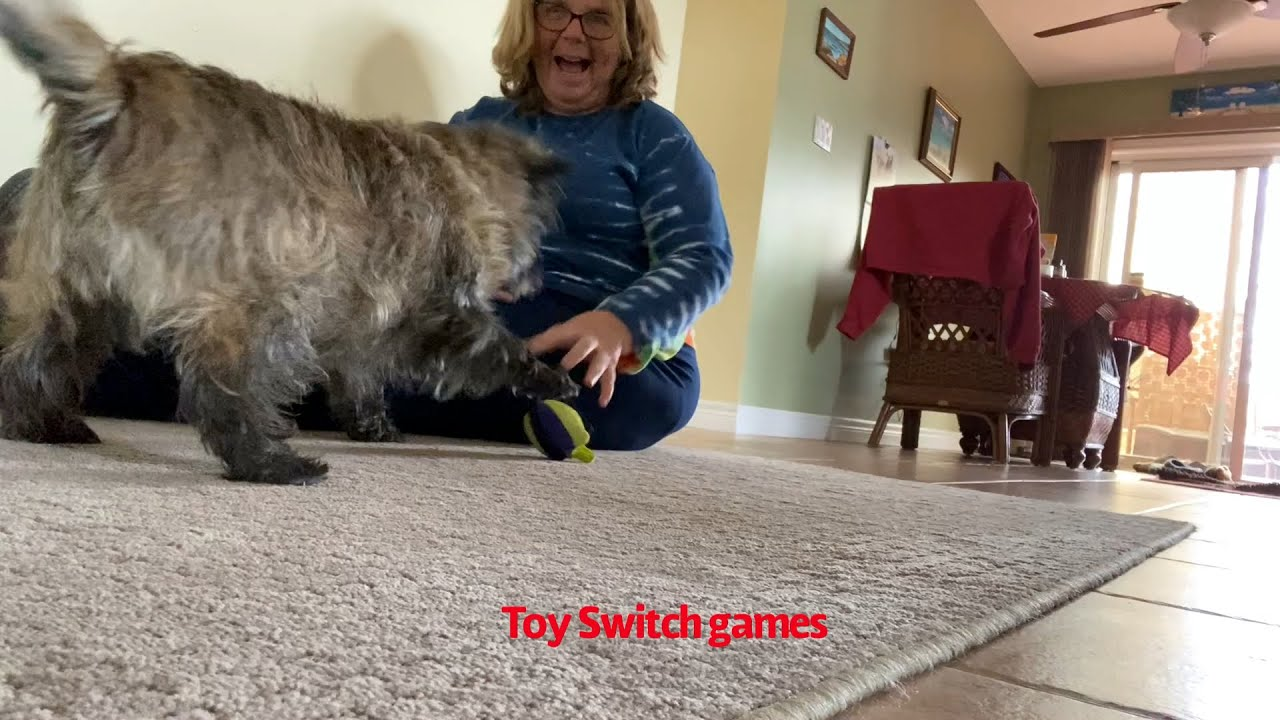 Play is Fun! Are you having some?