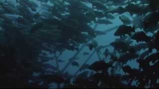 "Watch Earth Ocean Farms in PBS Series ""Earth, A New Wild"""