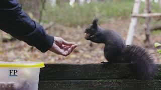 Eichhörnchenflüsterer aus dem Erzgebirge