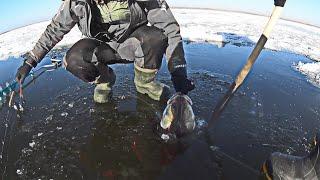 ОН в ней НЕ ПОМЕЩАЕТСЯ Рыбалка со льда на ОГРОМНЫХ СУДАКОВ