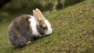 #1564. Кролики и зайцы (В мире животных)