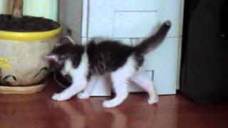 Игручий котенок