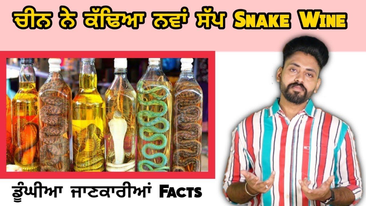 Snake Wine ਪੀਂਦੇ ਨੇ ਚੀਨ Vich Lok | ਡੂੰਘੀਆ ਜਾਣਕਾਰੀਆਂ facts | China ne kdya Nawa Sap | Punjabi Videos