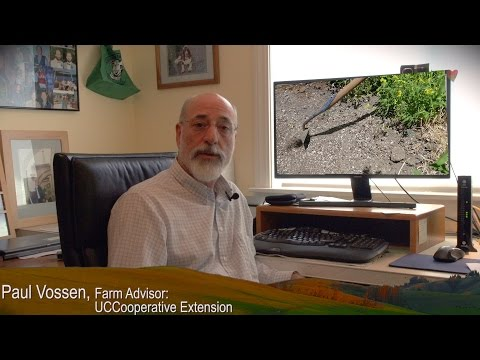 """UC Cooperative Extension  """"Farming In Drought Conditions"""" Series: Weed Control"""