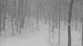 Philip Jeays - Still The Snow Falls
