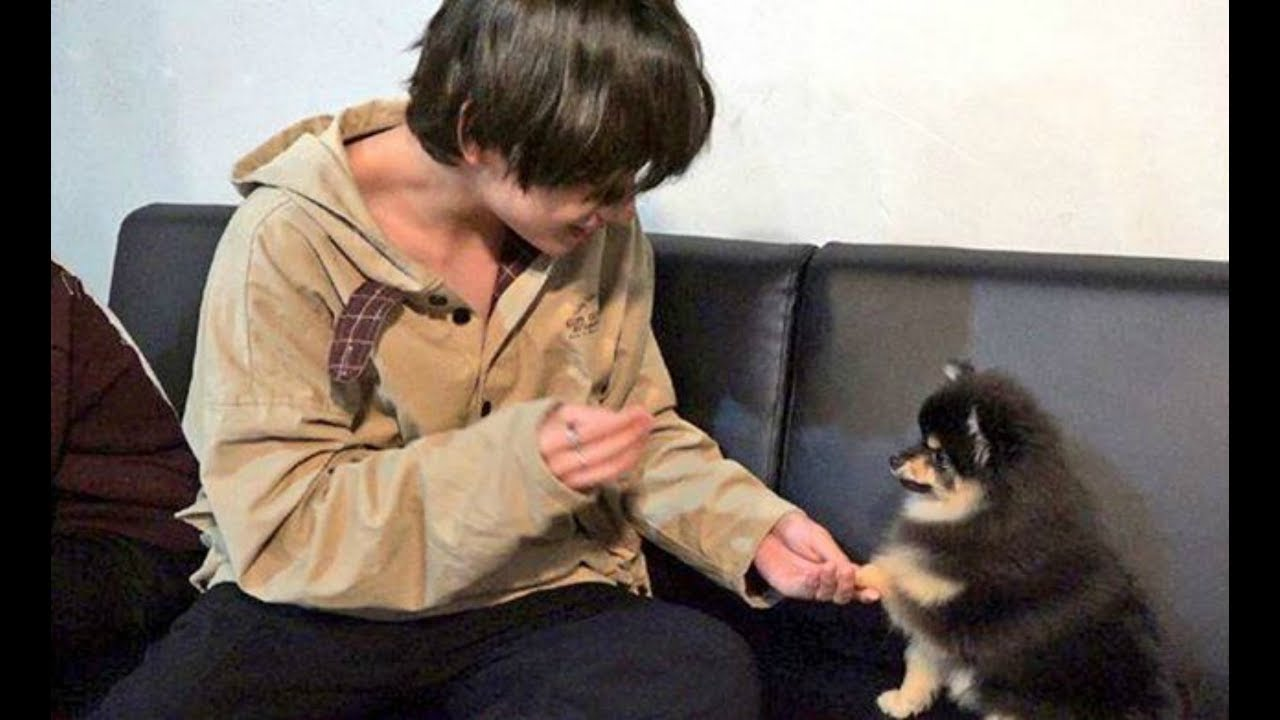 YEONTAN | BTS V with his dog PART 4 + other members