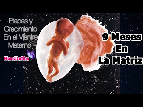 sintomas de gravidez gemelar a las 9 semanas