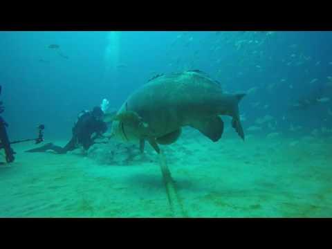 Grouper Bites Head Off Diver