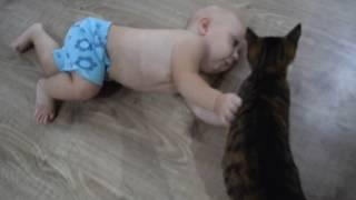 Смешные маленькие дети и кошки ❤️ Ребенок и кот. Кто сильнее? Funny cats video