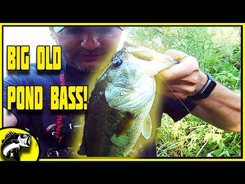 BIG Old Pond BASS! | Summer Pond Bass Fishing (And Some Bluegill) | Fishbrain | Northwest Indiana